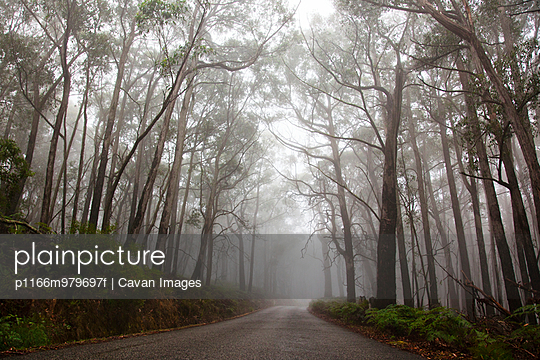 Road Disappearing into Misty Forest