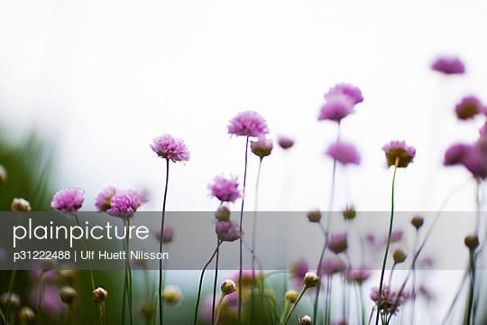 Flowers on a field Sweden