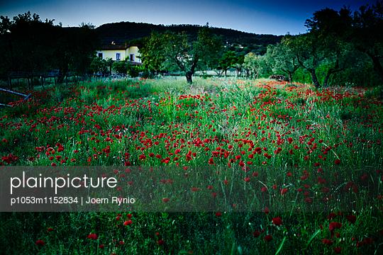 Poppy field in the night - p1053m1152834 von Joern Rynio