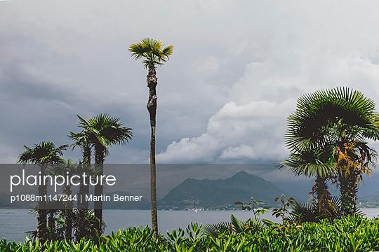 Palmen - p1088m1147244 von Martin Benner