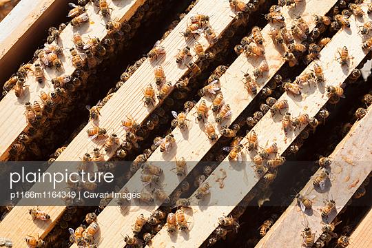 p1166m1164349 von Cavan Images