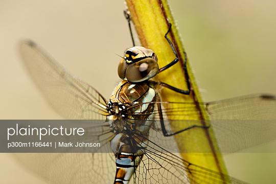 p300m1166441 von Mark Johnson