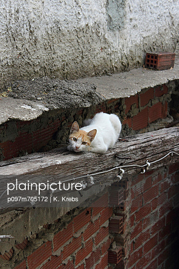 Cat squatting on a wooden beam
