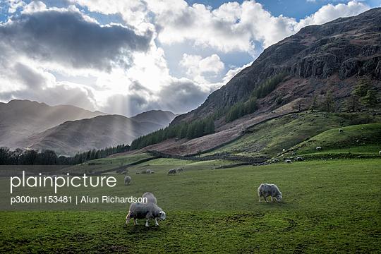 p300m1153481 von Alun Richardson