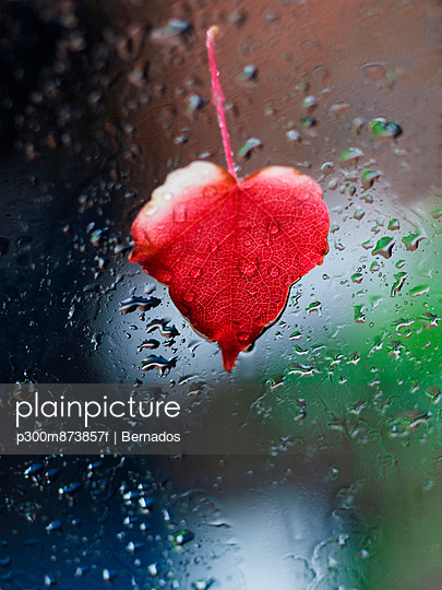 Heart-shaped red leaf sticking at window full of raindrops