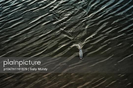 p1047m1161875 von Sally Mundy