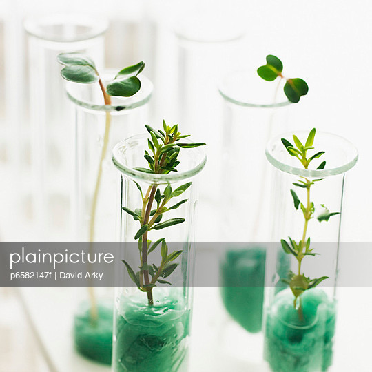Plants Growing in Test Tubes