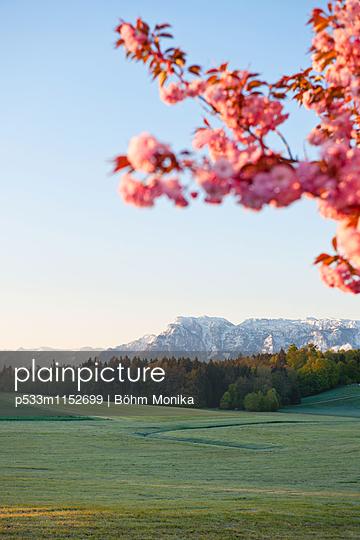 Frühlingsstimmung in Bayern - p533m1152699 von Böhm Monika