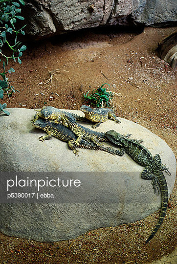 Reptiles in a zoo