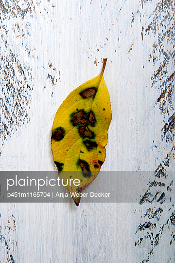 Herbstlaub - p451m1165704 von Anja Weber-Decker