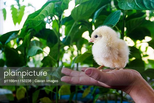p1166m1152238 von Cavan Images