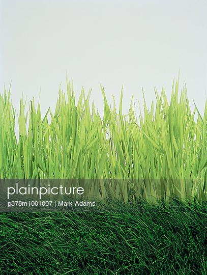 Grass advertisement