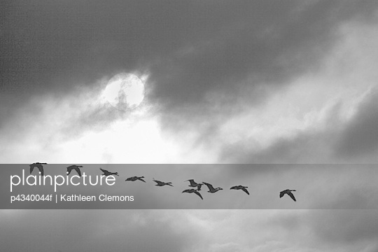 Birds flying in sky (B&W)