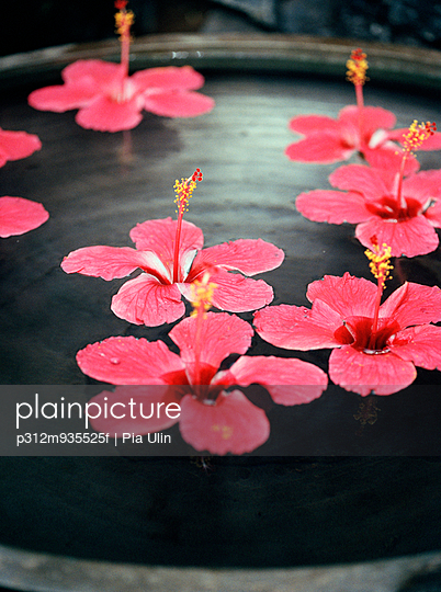 Pink flowers floating on water