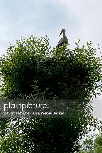 Storchennest mit Storch - p451m1149684 von Anja Weber-Decker