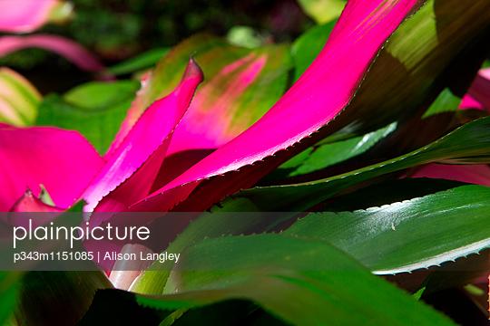 p343m1151085 von Alison Langley