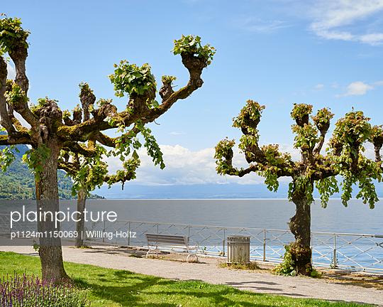 Parkbank am Genfer See - p1124m1150069 von Willing-Holtz