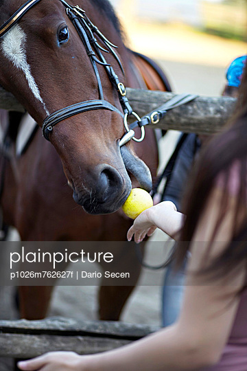 Horse Eating An Apple, Baranja, Croatia, Europe