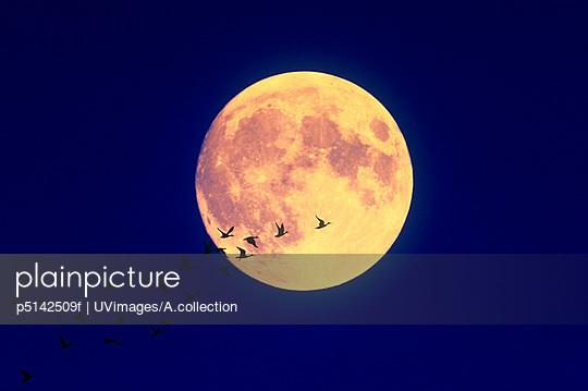 Full Moon And A Bird