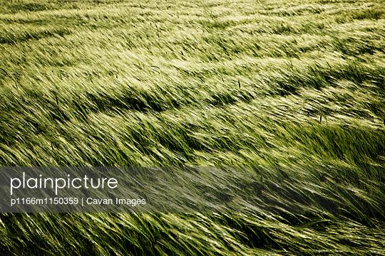 p1166m1150359 von Cavan Images