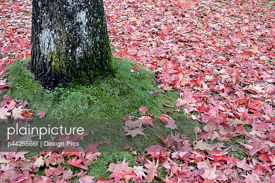 Tree and leaves; Leaves on the ground beside the base of a tree