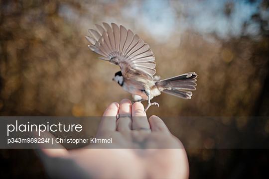 Flying bird on hand.