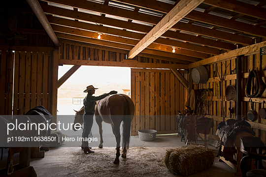 Female rancher brushing horse in stable