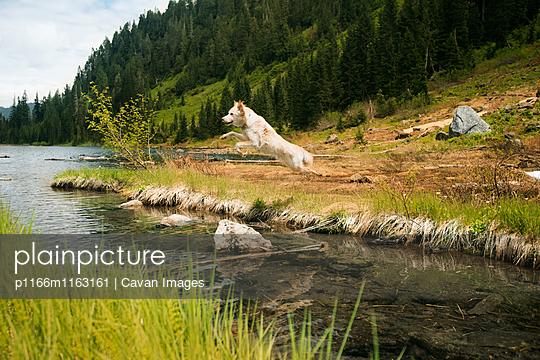 p1166m1163161 von Cavan Images