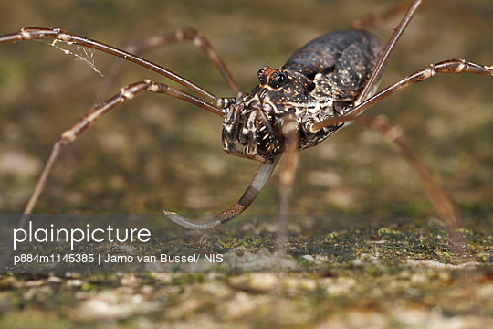 p884m1145385 von Jarno van Bussel/ NIS