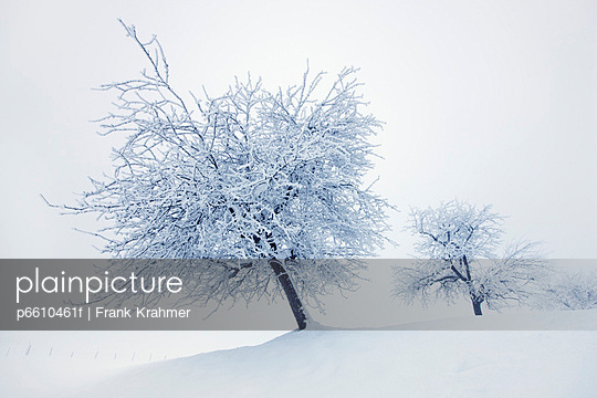 Winter landscape with snow covered fruit trees