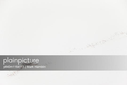p840m1164111 von Mark  Hamblin