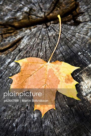 Autumn leaves on a stump