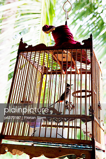 Bird in cage in Thailand