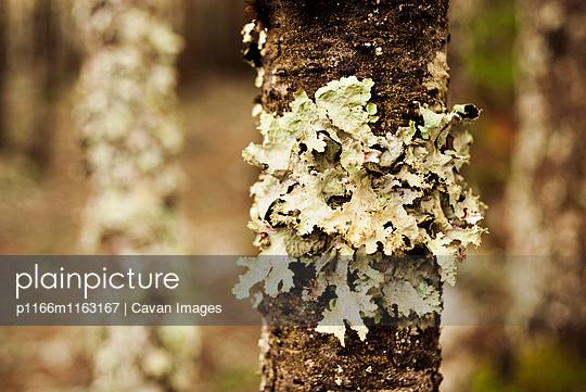 p1166m1163167 von Cavan Images