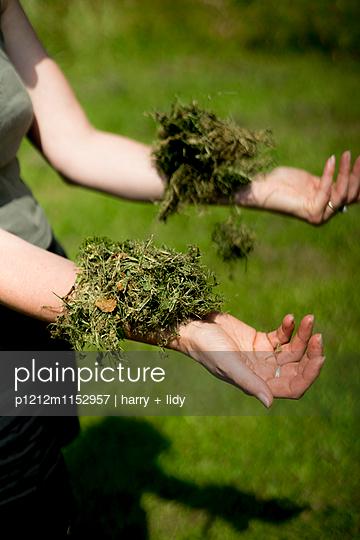 Rasenknäuel auf dem Arm - p1212m1152957 von harry + lidy
