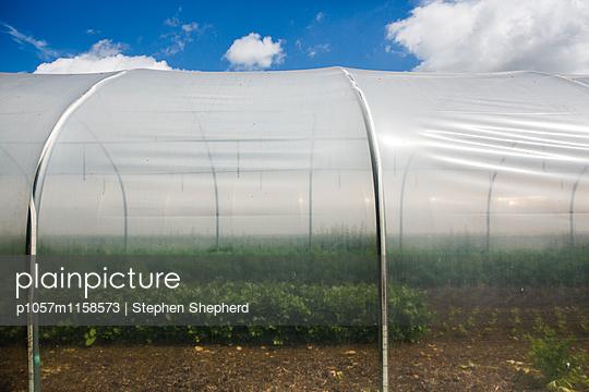 Gärtnerei - p1057m1158573 von Stephen Shepherd