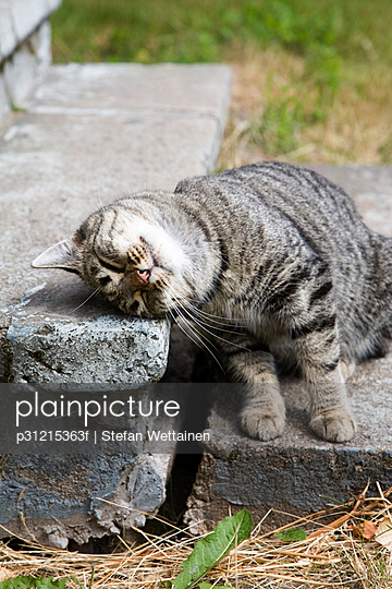 A cat on stone stairs.