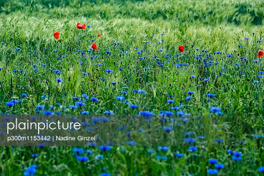 p300m1153442 von Nadine Ginzel