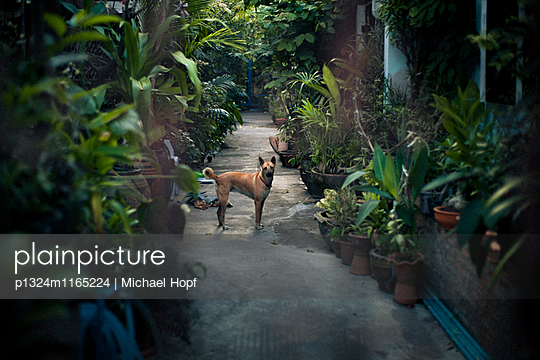 Ein Hund im verwilderten Garten - p1324m1165224 von michaelhopf