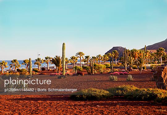 Kaktus und Palmengarten - p1299m1148482 von Boris Schmalenberger