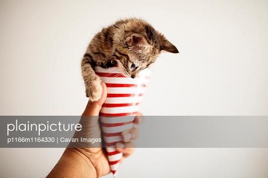 p1166m1164330 von Cavan Images