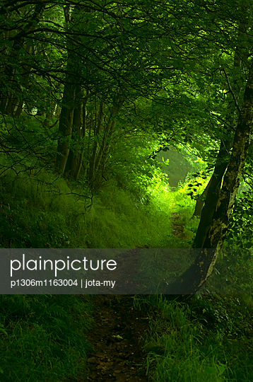 Waldweg - p1306m1163004 von jota-my