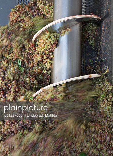 Grape crushing in machinery, blurred motion