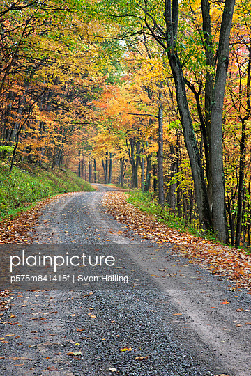 Road through autumn forest, West Virginia, USA