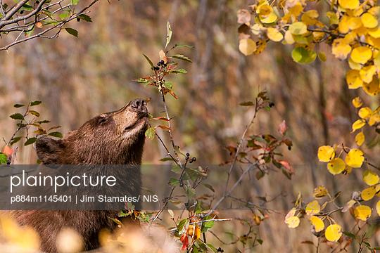 p884m1145401 von Jim Stamates/ NIS