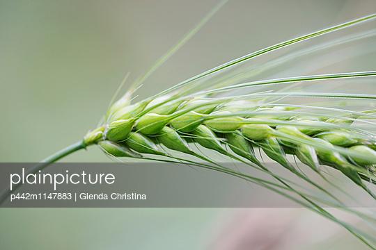 p442m1147883 von Glenda Christina
