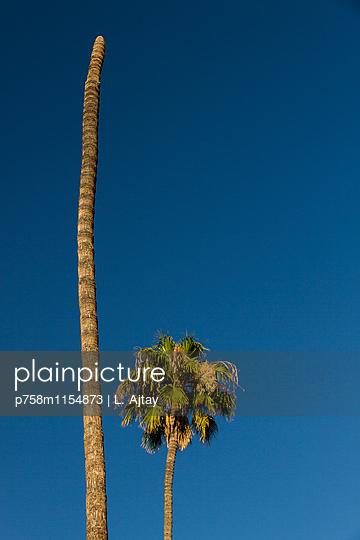 Palme und Stamm einer Palme - p758m1154873 von L. Ajtay