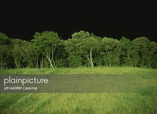 Forest at night. Yaita, Tochigi Prefecture, Japan