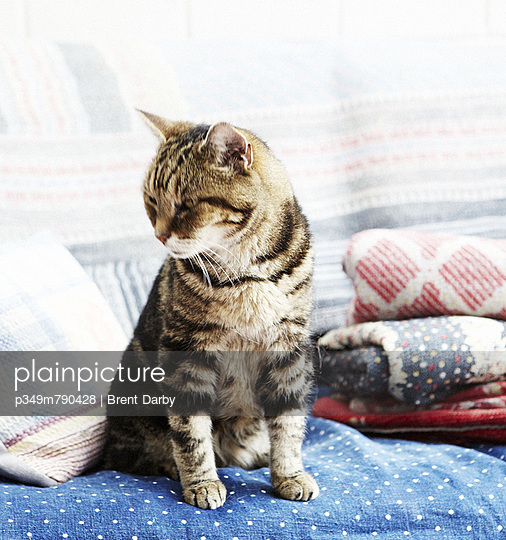 Cat with folded blankets in living room extension of London home