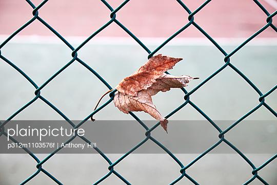 Leaf on fence